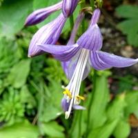 Ciemne kwiatki miniaturki