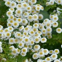 dużo kwiatów (łąkowych)