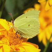 Dzień z motylami :)