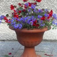 gazon z kwiatami