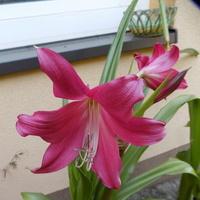 Jest kwiat Krynki:)