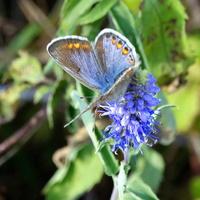 Łąki wykoszone, motylkowa posucha