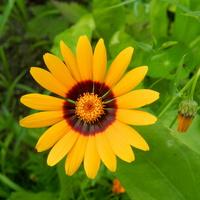 Kwiatek w moim ogrodzie