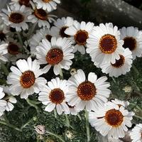 kwiatki......