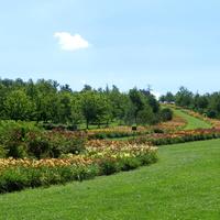 Liliowce w Arboretum -Wojsławice
