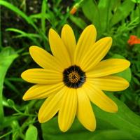 Mały żółty kwiat