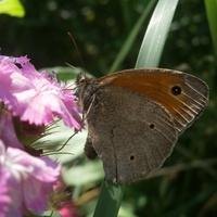 Motylki się pokazują...
