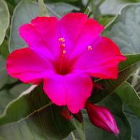 Neonowy róż kolorujący wieczorem :)