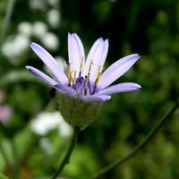 Nie zabraknie błękitu gdy jest w ogródku:)