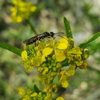 owad i kwiat....