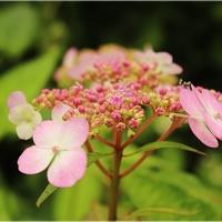 Pierwsze kwiatki ...