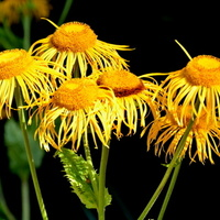 zmęczone kwiaty tymi upałami