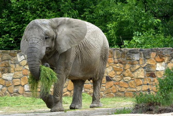 12.08 - Światowy Dzień Słonia (od 2012 r.)