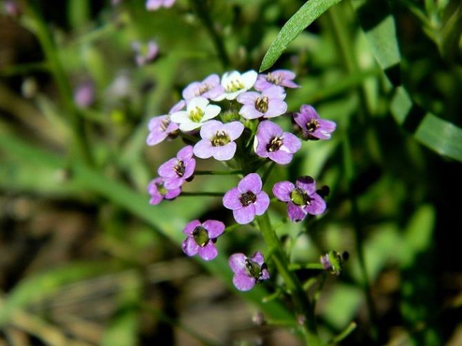 Drobinki kwiatowe:)