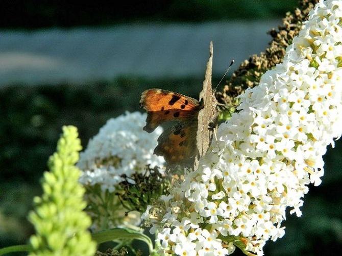 Dziś motyle miały wolne;)