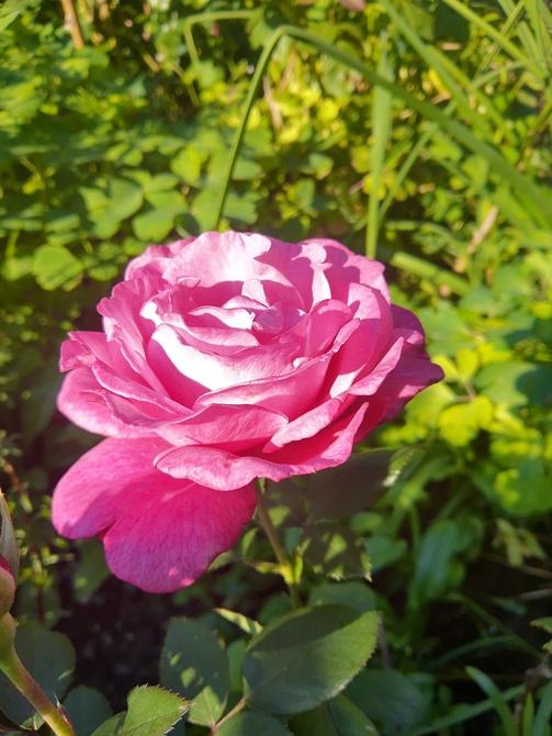 księżniczka w ogródku