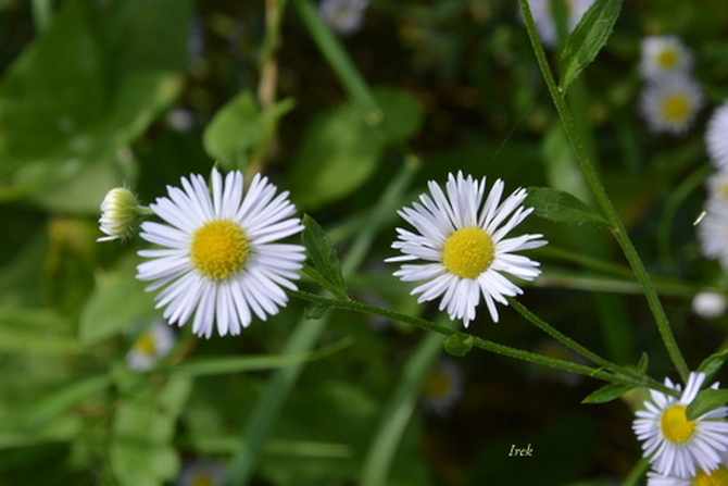kwiatki z bliska