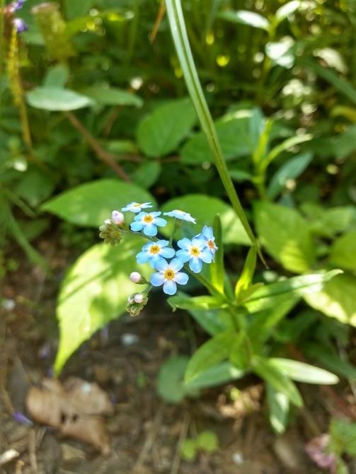 Kwitną nie tylko wiosną