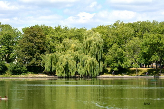 Zdjęcia z parku w moim mieście (c.d.)