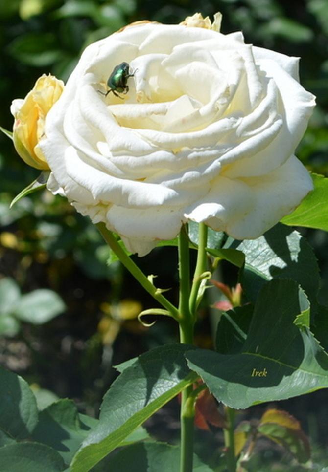 zdjęcie kwiatka jakie lubicie najbardziej