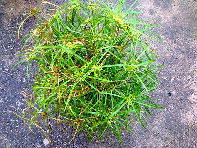 Zielona czupryna