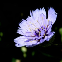 Błękitny, ale bardziej w lila;)