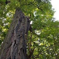 Duże drzewo........