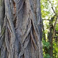 Dziwne drzewo.....