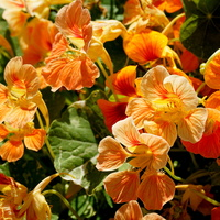 energetyczne kwiaty lata :)