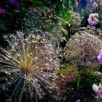 fajerwerki wśród kwiatów ☺