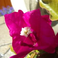 Kwiatek w osłonce.
