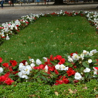 Kwiaty w parku, niecierpek