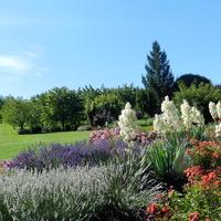 Lawenda-Arboretum w Wojsławicach