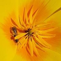 Mała pszczółka.....