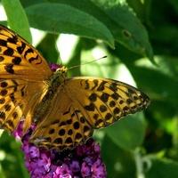 Motylek ze wspomnień:)
