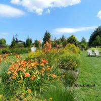 Rabata pomarańczowa -Arboretum w Wojsławicach