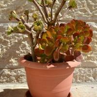 roślina kaktusowata na wolności.