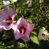 Różowych snów, dobrego przyszłego tygodnia :)