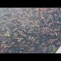 Rybom w wodzie też gorąco