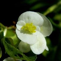 Takie zwykłe, wyjątkowe kwiaty:)