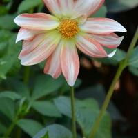 zachudzony kwiatek