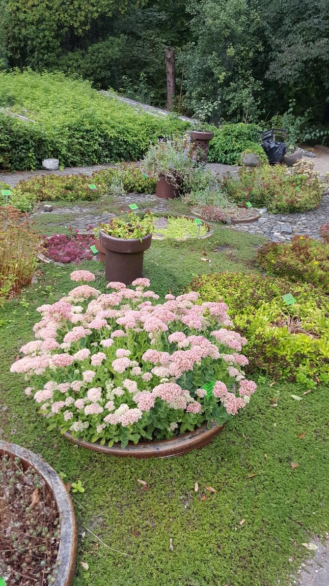 Botaniczny wrzesień 2017......