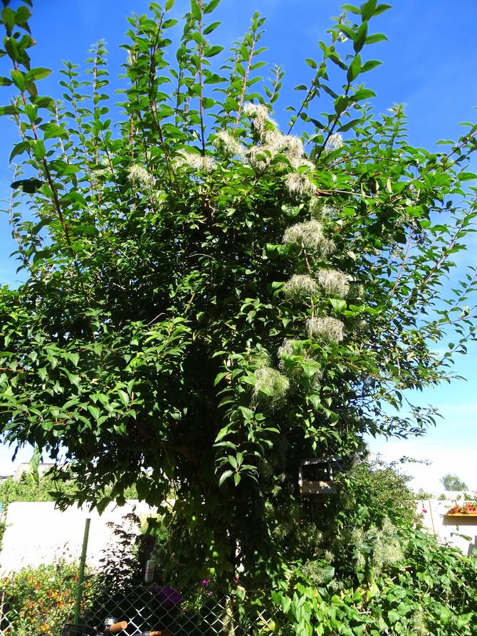 Jakieś drzewo mi wyrosło :))