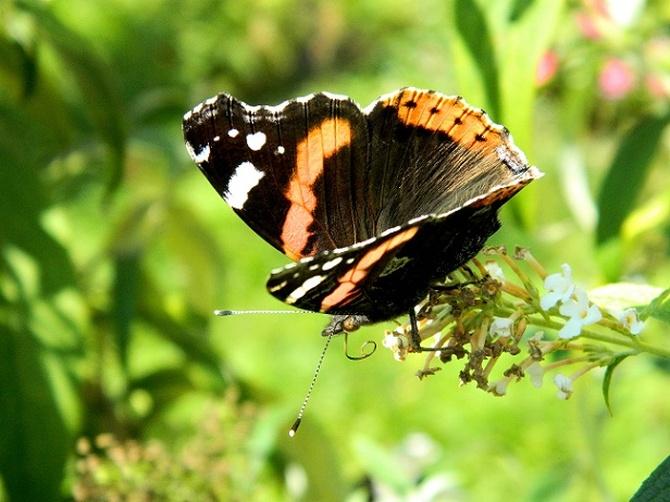 Nawet w przekwitających znajdują nektar:)