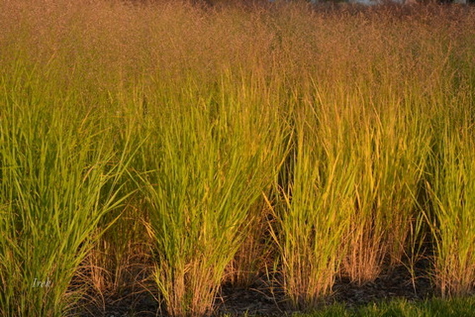 Ozdobne rośliny w Żyrardowie