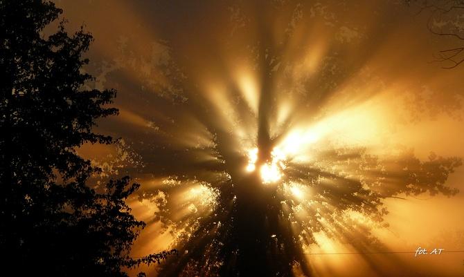 Przez gęstą mgłę musiało....