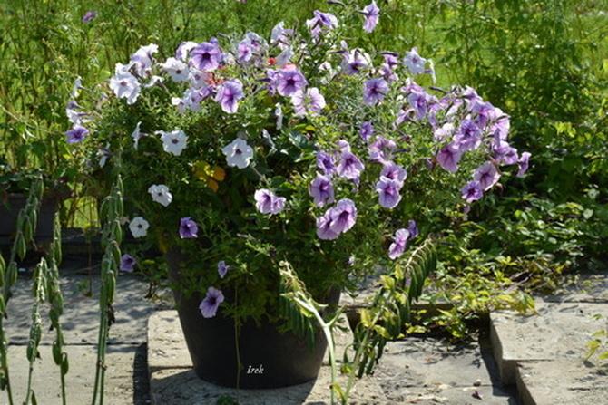 wazon z kwiatami w plenerze