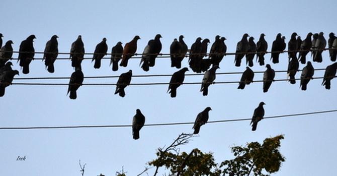 zlot ptaków