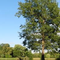 Drzewa nad stawem