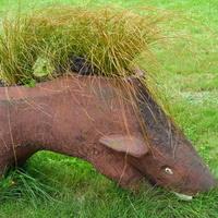 dzik na trawie w ogrodzie botanicznym